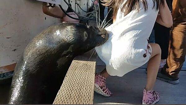 В Канаде морской лев напал на девочку и утащил под воду - Sputnik Тоҷикистон