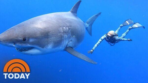 Плавание с большой белой акулой - видео - Sputnik Таджикистан
