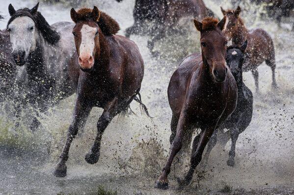 Лошади в Монголии - Sputnik Таджикистан