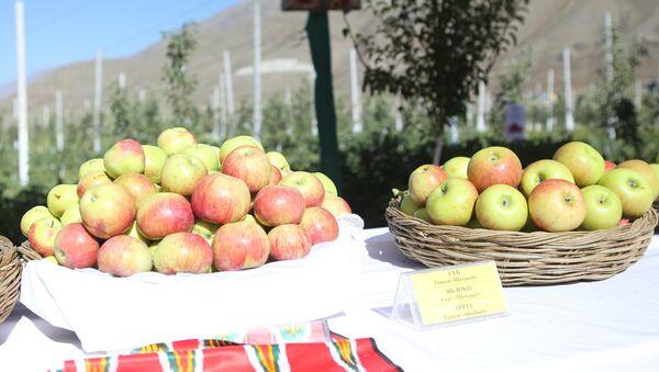 Эмомали Рахмон посетил яблоневый сад в Горно-Матчинском районе - Sputnik Тоҷикистон