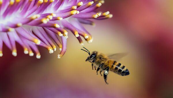 Пчелка - Sputnik Таджикистан