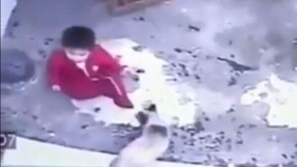 Кот спас ребенка от падения с лестницы - Sputnik Таджикистан
