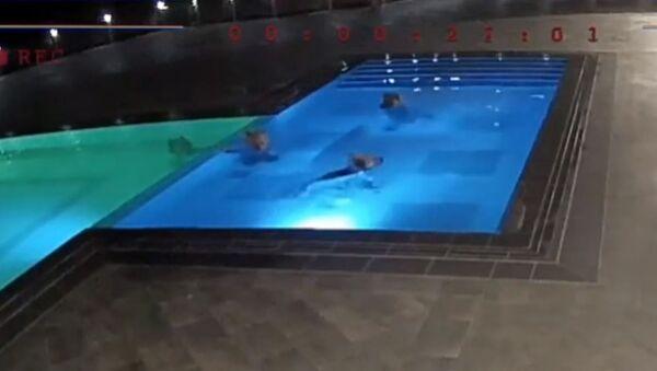 Медведи пробрались в SPA-салон и искупались в бассейне - Sputnik Таджикистан