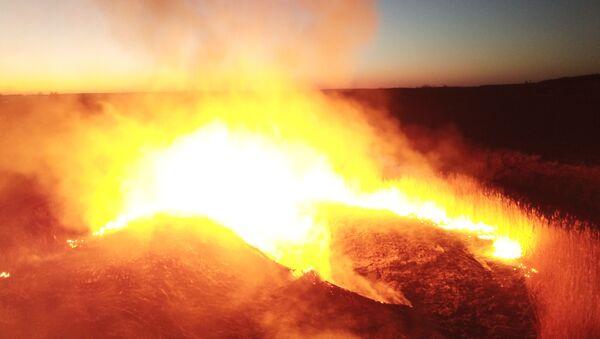 Лесной пожар в Чернобыльской зоне - Sputnik Таджикистан