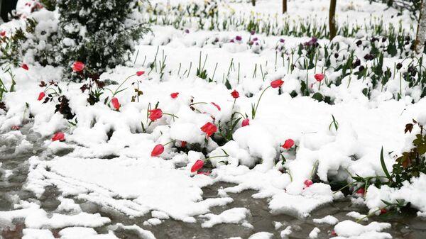 Снегопад в Душанбе  - Sputnik Таджикистан