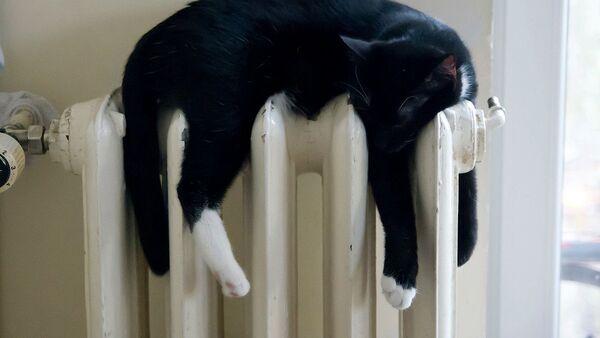 Кот на радиаторе - Sputnik Таджикистан
