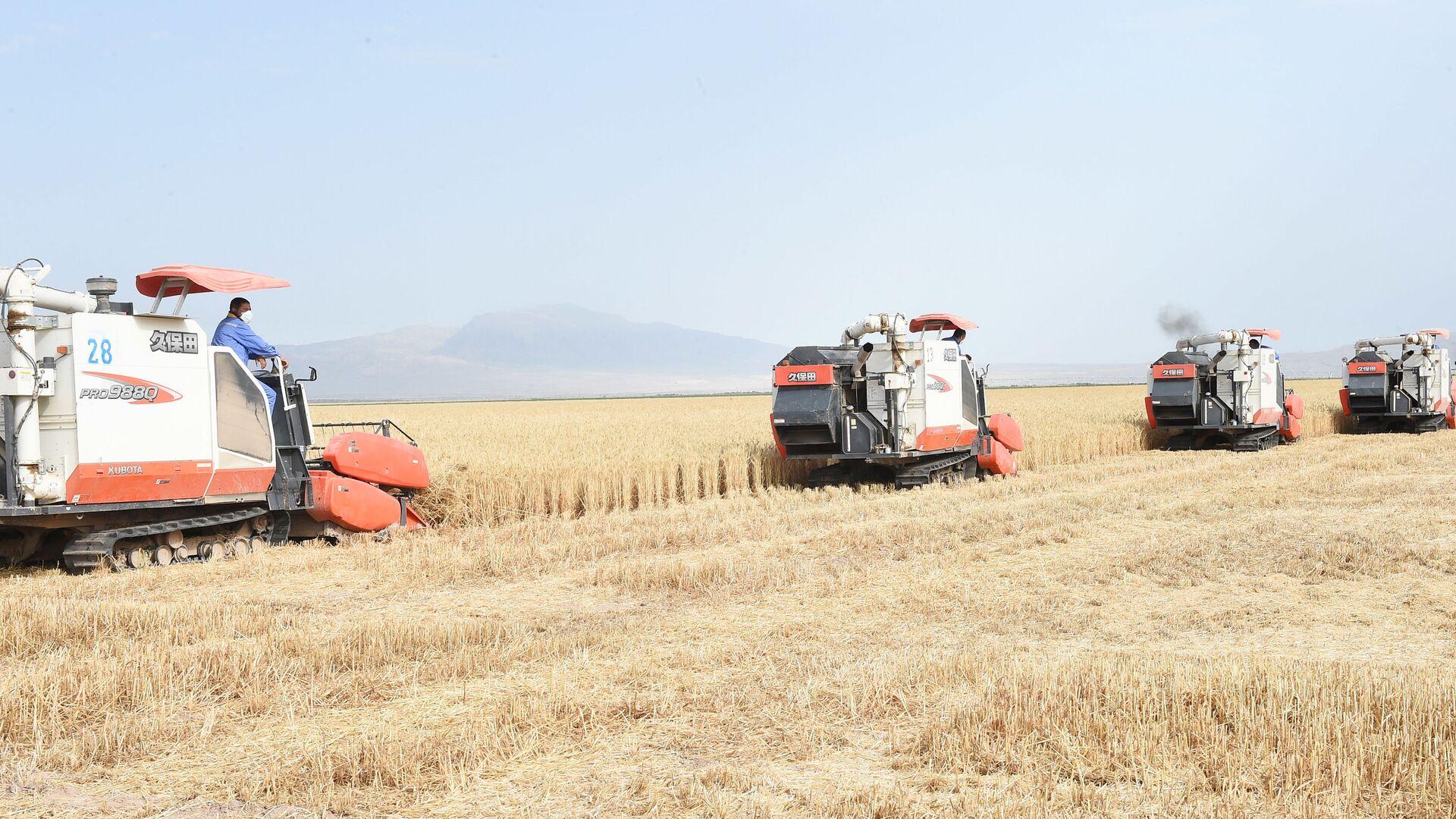 Комбайны собирают урожай пшеницы - Sputnik Таджикистан, 1920, 22.06.2021