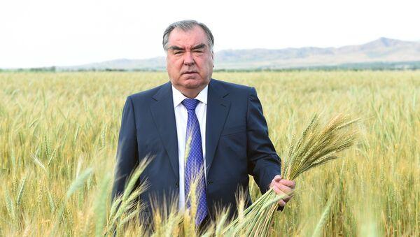Эмомали Рахмон посетил пшеничные поля Мухсинджона и сады Хуросона - Sputnik Таджикистан
