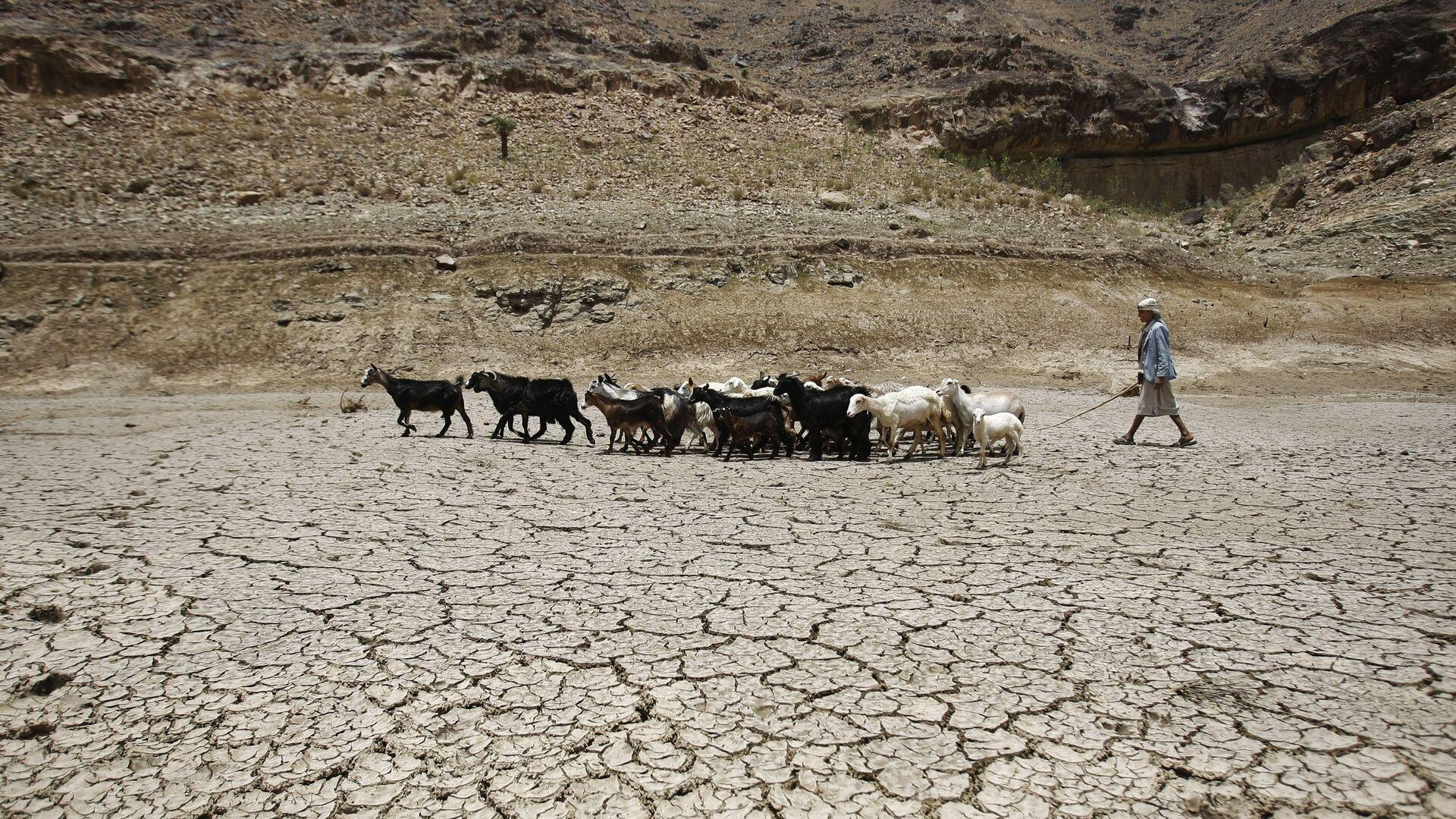 Пастух ведет стадо коз через плотину, пострадавшую от засухи, на окраине города Сана, Йемен - Sputnik Тоҷикистон, 1920, 23.07.2021