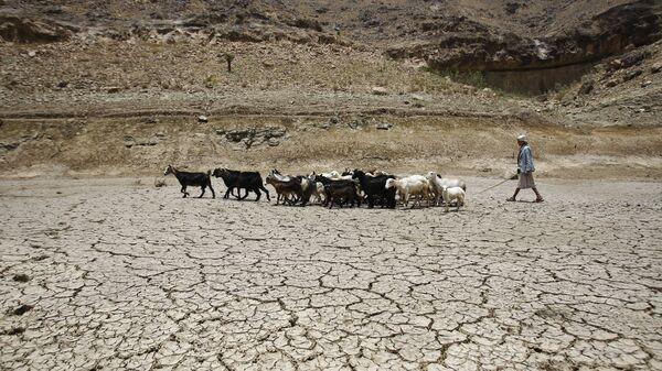 Пастух ведет стадо коз через плотину, пострадавшую от засухи, на окраине города Сана, Йемен - Sputnik Тоҷикистон