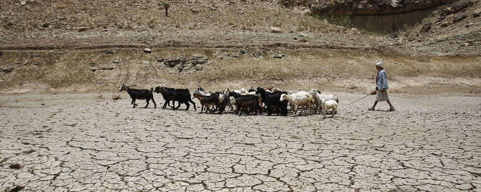 Пастух ведет стадо коз через плотину, пострадавшую от засухи, на окраине города Сана, Йемен - Sputnik Таджикистан, 1920, 15.07.2021